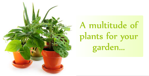 www.justgardenplants.co.uk